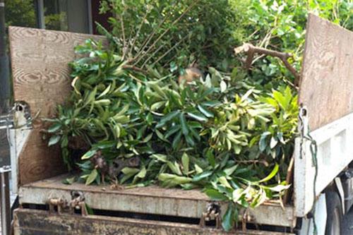Ramassage des déchêts verts